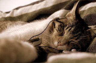 Love music cat
